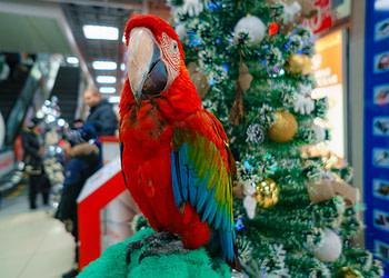 попугай на праздник
